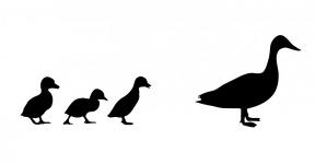 duck-220226_1280