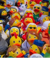 toy-ducks-535335_1920